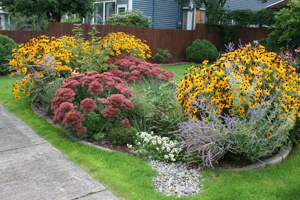 Seattle Rain Garden Design Seattle RainWise Incentives Rain Dog