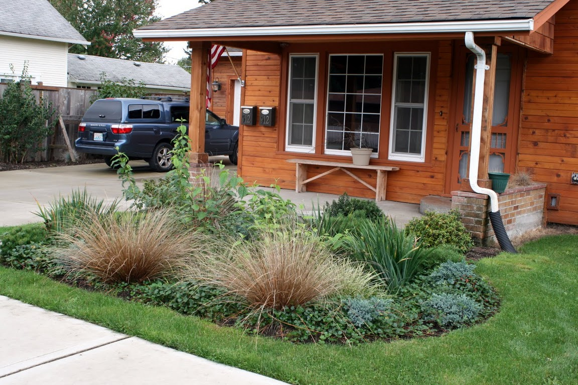Rain Dog Designs | Landscaping Services Protecting Puget Sound