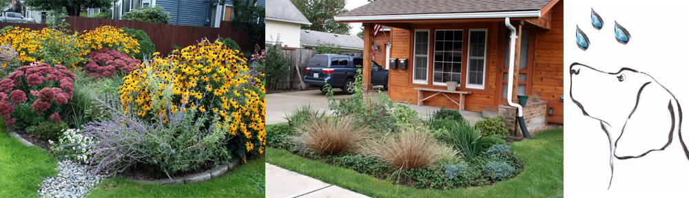 Rain Dog Designs Landscaping Services Protecting Puget Sound